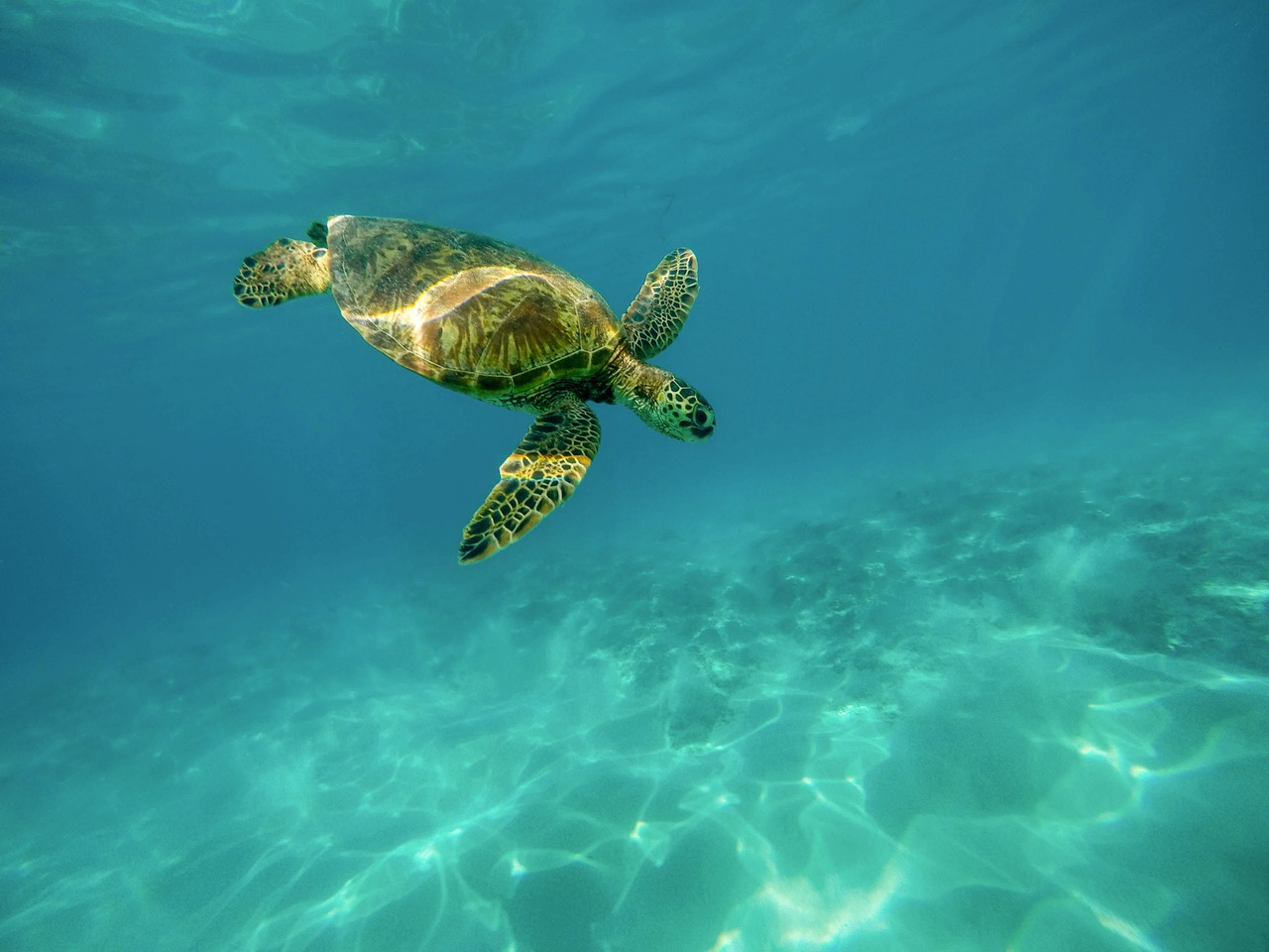 Sea Turtle Habitats and Behavior